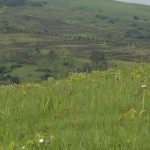 conservancy landscape